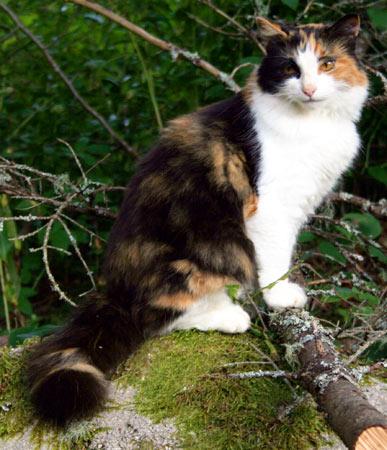http://www.kirsanov.com/alina/montreal/cat.jpg
